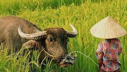 男女那点事图片_对牛弹琴,变成了对牛撒尿 - 红辣椒 - 不辣不青春